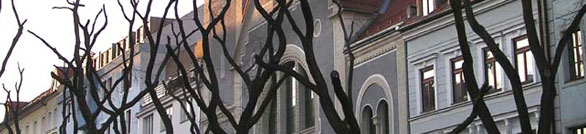 Photograph of tree branches in front of a building